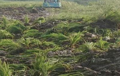 农村土地流转应尊重农民意愿 不得损害农民权益-伽5自媒体新闻网-关注民生/资讯/公益/美食等综合新闻的自媒体博客